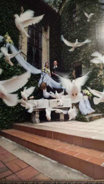 Begin your new start in life with a symbol of love,a white dove release!