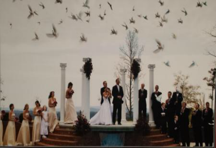Make your special day all the more beautiful with a dove releasing ceremony!